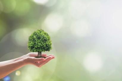 GfK-Studie: Handwerksbetriebe aufgepasst – so ticken grüne Konsumenten